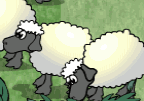 Sheep Shooting
