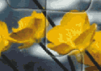 Yellow Flowers Jigsaw